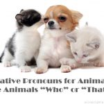 "Relative Pronouns for Animals: Are Animals ""Who"" or ""That""?"