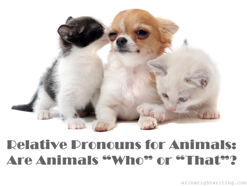 "Puppy with two kittens with title Relative Pronouns for Animals: Are Animals ""Who"" or ""That""?"