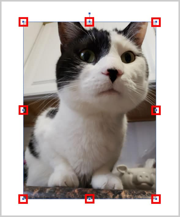 Image of cat with resizing handles