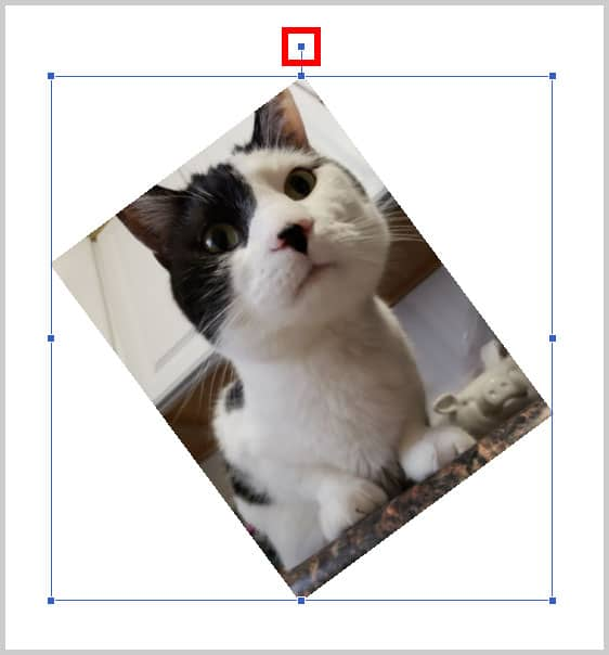 Image of cat with rotation handle